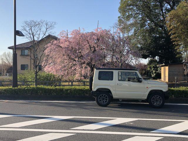 桜とジムニー